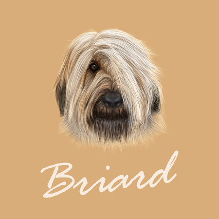 frise: Illustrated Portrait of Briard dog. Cute face of fluffy dog on tan background
