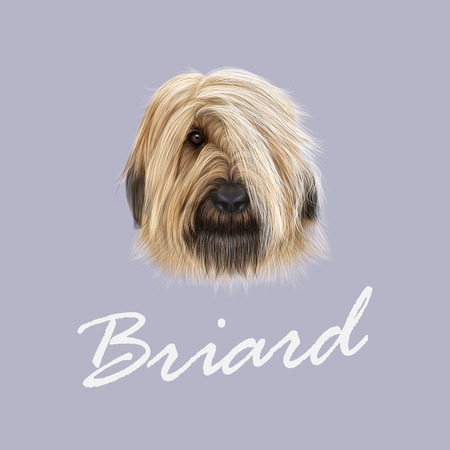 Illustrated Portrait of Briard dog. Cute face of fluffy dog on blue background