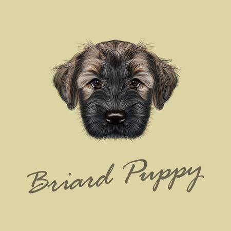 Illustrated Portrait of Briard puppy. Cute face of fluffy dog on tan background