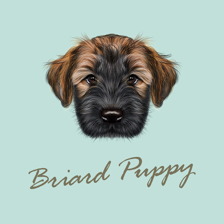 llustrated Portrait of Briard puppy. Cute face of fluffy dog on blue background Illustration