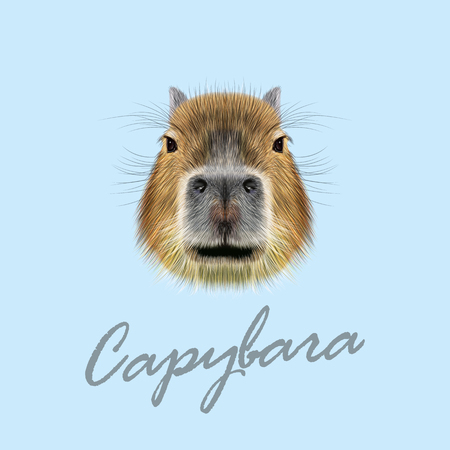 biggest animal: Illustrated Portrait of Capybara. Cute face of wild Capybara on blue background.