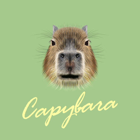 biggest animal: Illustrated Portrait of Capybara. Cute face of wild Capybara on green background.