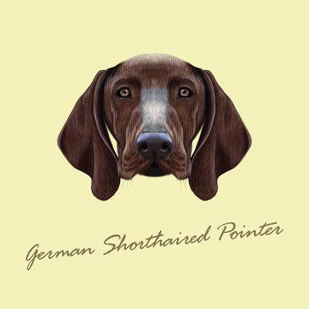 pointer dog: Illustrated portrait of German Shorthaired Pointer dog. Cute brown face of domestic dog on yellow background