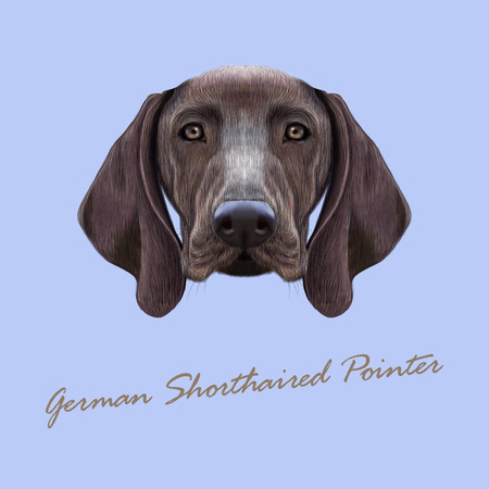 short haired: Illustrated portrait of German Shorthaired Pointer dog. Cute brown face of domestic dog on blue background