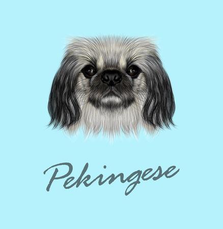 pekingese: Illustrated portrait of Pekingese dog. Cute fluffy face of Pekingese dog on blue background