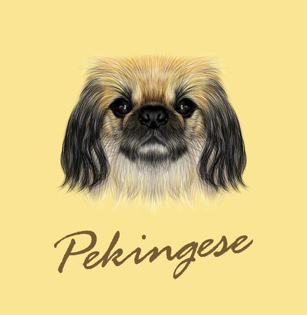 pug nose: Illustrated portrait of Pekingese dog. Cute fluffy face of Pekingese dog on yellow background Illustration