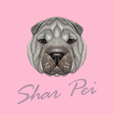 sharpei: Illustrated Portrait of Shar Pei dog. Cute silver wrinkly face of domestic dog on pink background. Illustration