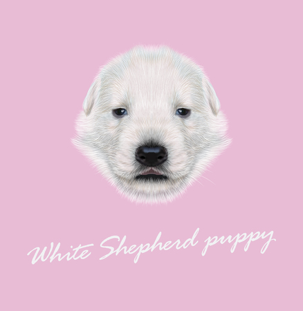 sheperd: Illustrated Portrait of White Sheperd puppy. Cute white fluffy face of domestic dog on pink background