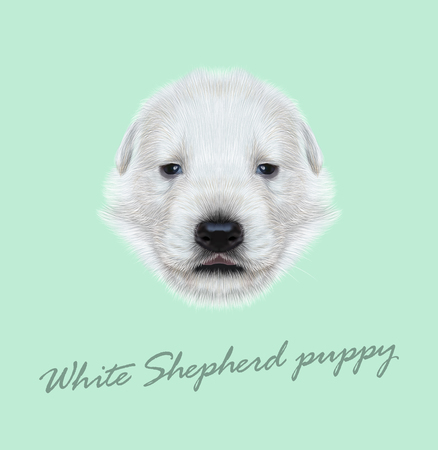 sheperd: Illustrated Portrait of White Sheperd puppy. Cute white fluffy face of domestic dog on blue background