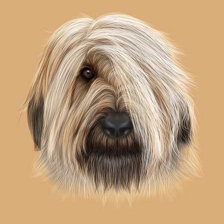 forelock: Illustrated Portrait of Briard dog. Cute face of fluffy dog on tan background