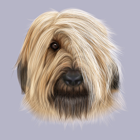 forelock: Illustrated Portrait of Briard dog. Cute face of fluffy dog on blue background