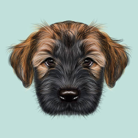 frise: Illustrated Portrait of Briard puppy. Cute face of fluffy dog on blue background