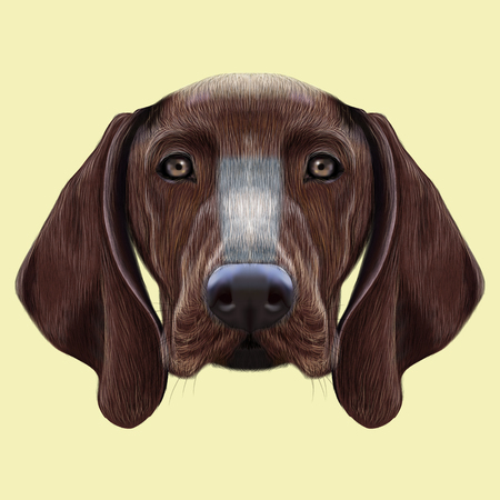 setter: Illustrated portrait of German Shorthaired Pointer dog. Cute brown face of domestic dog on yellow background