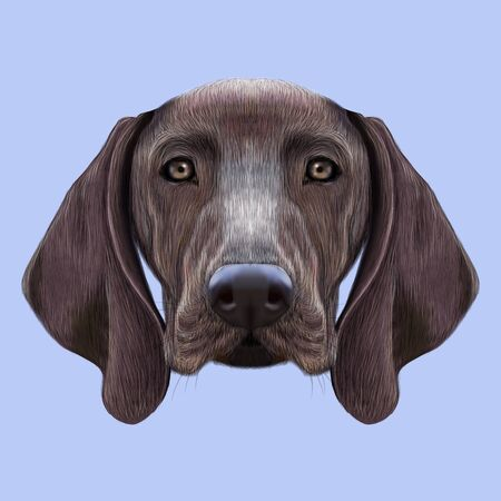 pointer dog: Illustrated portrait of German Shorthaired Pointer dog. Cute brown face of domestic dog on blue background