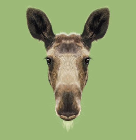 Illustrated Portrait of Moose. Cute face of forest elk on green background. 스톡 콘텐츠