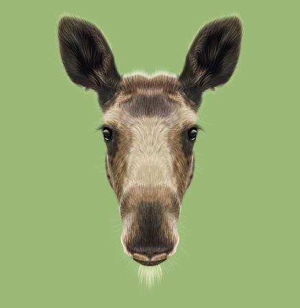 Illustrated Portrait of Moose. Cute face of forest elk on green background. Banque d'images