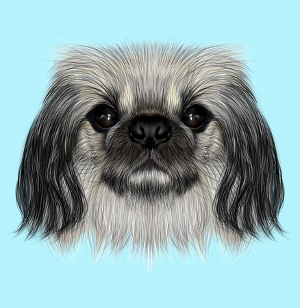 dogie: Illustrated portrait of Pekingese dog. Cute fluffy face of Pekingese dog on blue background