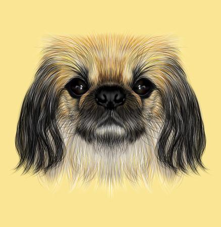pekingese: Illustrated portrait of Pekingese dog. Cute fluffy face of Pekingese dog on yellow background Stock Photo