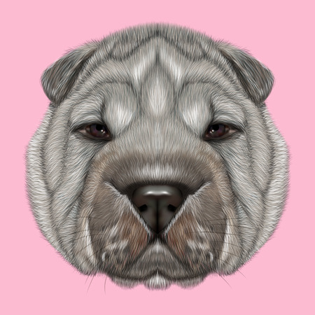 wrinkly: Illustrated Portrait of Shar Pei dog. Cute silver wrinkly face of domestic dog on pink background. Stock Photo