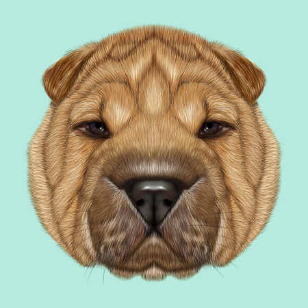 wrinkly: Illustrated Portrait of Shar Pei dog. Cute red wrinkly face of domestic dog on blue background.