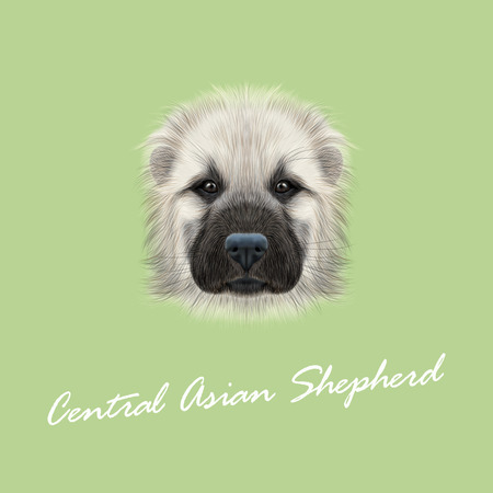 Illustrated Portrait of Central Asian Shepherd Dog. Cute fluffy white face of young domestic dog on green background. Illustration