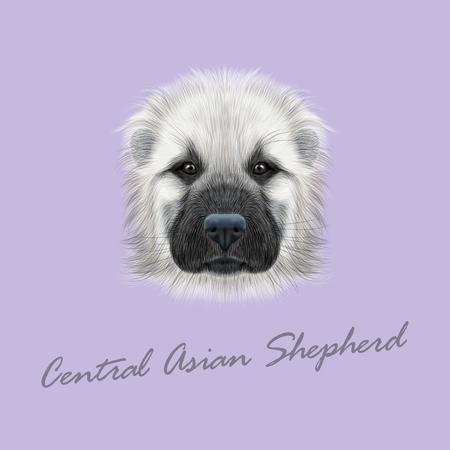 alabai: Illustrated Portrait of Central Asian Shepherd Dog. Cute fluffy white face of young domestic dog on violet background. Illustration