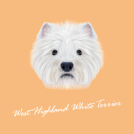 scottie: Illustrated Portrait of West Highland White Terrier. Cute fluffy white face of  domestic dog on peach background.