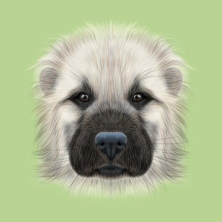 alabai: Illustrated Portrait of Central Asian Shepherd Dog. Cute fluffy white face of young domestic dog on green background. Stock Photo