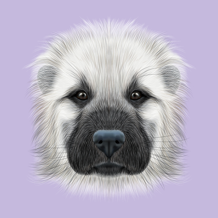 alabai: Illustrated Portrait of Central Asian Shepherd Dog. Cute fluffy white face of young domestic dog on violet background. Stock Photo