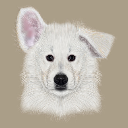 blanc: Illustrated Portrait of White Swiss Shepherd dog. Cute white fluffy face of domestic puppy on beige background. Stock Photo