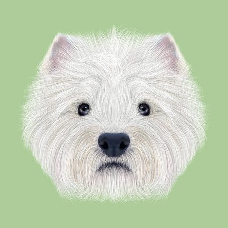 scottie: Illustrated Portrait of West Highland White Terrier. Cute fluffy white face of  domestic dog on green background.