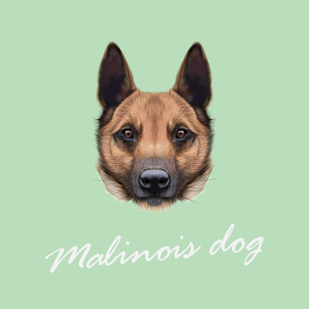 Vector Illustrated Portrait of Malinois dog. Cute face of Shepherd dog on beige background. Illustration
