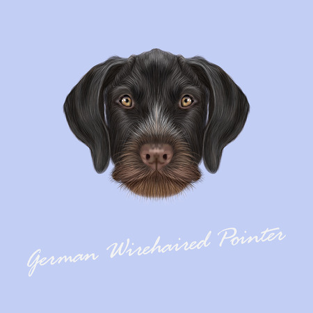 pointer dog: Vector Illustrated Portrait of German Wirehaired Pointer dog. Cute brown face of hunting dog on blue background.