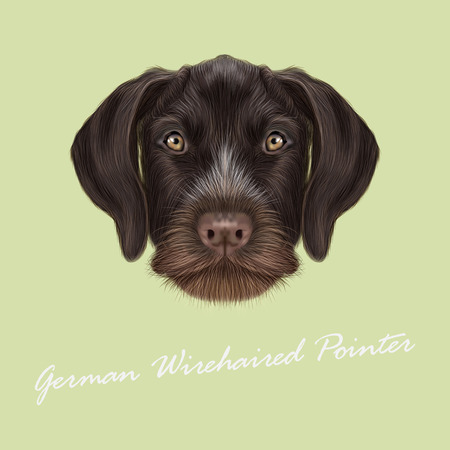 pointer dog: Vector Illustrated Portrait of German Wirehaired Pointer dog. Cute red face of hunting dog on yellow background.
