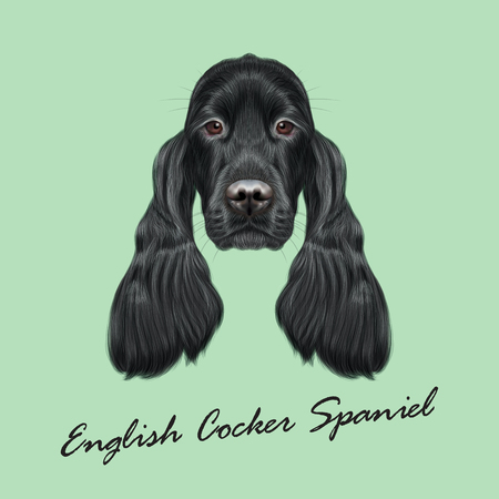 setter: Vector Illustrated portrait of Gordon Setter dog. Cute face of hunting breed of dog on green background.