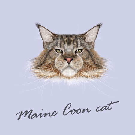 Vector Illustrated Portrait of Maine Coon cat. Cute fluffy face of domestic cat on blue background. Illustration