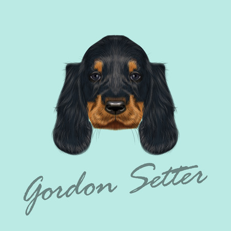 setter: Vector Illustrated Portrait of Gordon Setter dog. Cute black curly face of domestic puppy on blue background.