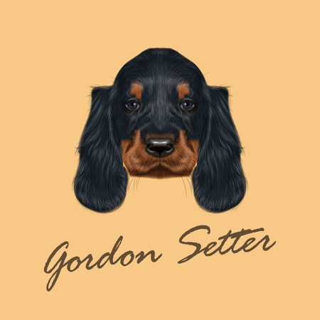 Vector Illustrated Portrait of Gordon Setter dog. Cute black curly face of domestic puppy on yellow background.