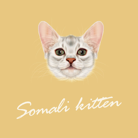 Vector Illustrated portrait of Somali kitten. Cute fluffy face of domestic cat on yellow background. Illustration