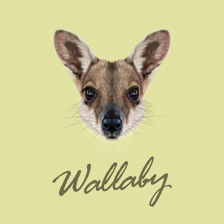 wallaby: Vector Illustrated Portrait of Wallaby. Cute face of wild Australian mammal Wallaby on yellow background. Illustration