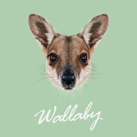 wallaby: Vector Illustrated Portrait of Wallaby. Cute face of wild Australian mammal Wallaby on green background. Illustration