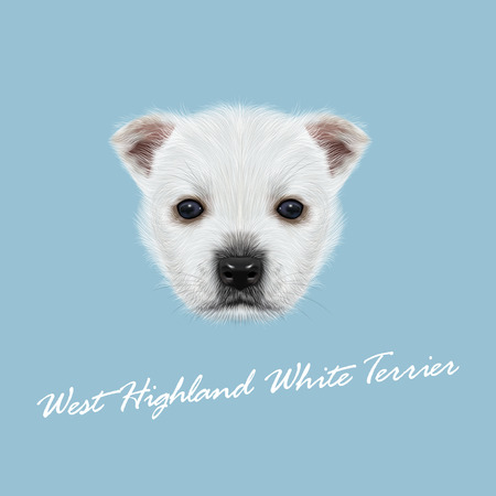 highland: Vector Illustrated Portrait of West Highland White Terrier. Cute white fluffy face of puppy on blue background. Illustration