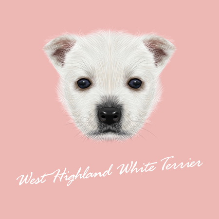 highland: Vector Illustrated Portrait of West Highland White Terrier. Cute white fluffy face of puppy on pink background.