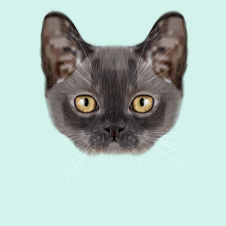 burmese: Illustrated Portrait of Burmese kitten. Cute blue face of domestic cat on blue background.
