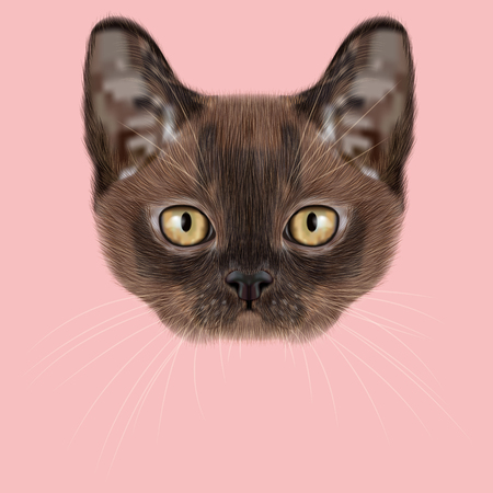 burmese: Illustrated Portrait of Burmese kitten. Cute Sable face of domestic cat on pink background.