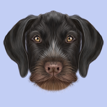 pointer dog: Illustrated Portrait of German Wirehaired Pointer dog. Cute brown face of hunting dog on blue background. Stock Photo