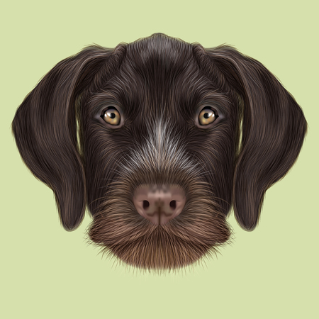 setter: Illustrated Portrait of German Wirehaired Pointer dog. Cute red face of hunting dog on yellow background.