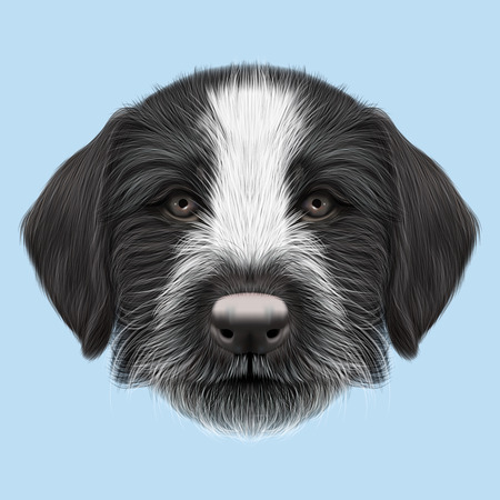 griffon: Illustrated Portrait of German Wirehaired Pointer puppy. Cute brown face of hunting dog on blue background.