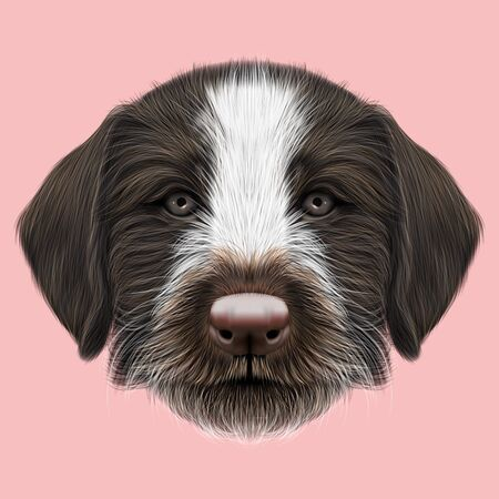 setter: Illustrated Portrait of German Wirehaired Pointer puppy. Cute brown face of hunting dog on pink background.