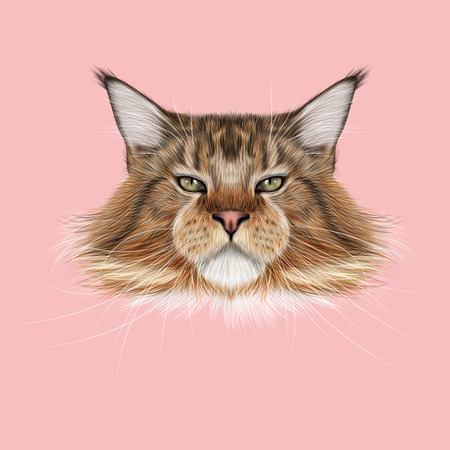 Illustrated Portrait of Maine Coon cat. Cute fluffy face of domestic cat on pink background.